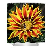 Gazania With Insect Shower Curtain