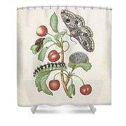 Gedaanteverwisseling Van De Nachtpauwoog  Maria Sibylla Merian  1679 Shower Curtain