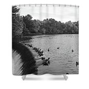 Ducks And Canada Geese On The Charles River Shower Curtain