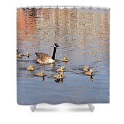 Geese And Goslings 3 Shower Curtain