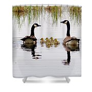 Geese And Goslings Shower Curtain
