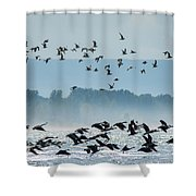Geese And Gulls Shower Curtain