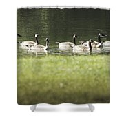 Geese At Spring Meadow Shower Curtain