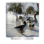 Geese At The Frozen Horninglow Basin Shower Curtain