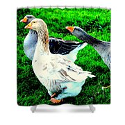A Couple Of Friendly Geese And One Goose Ready For A Fight  Shower Curtain by Hilde Widerberg