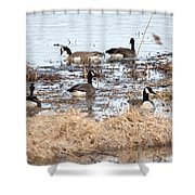 Geese Hangout Shower Curtain