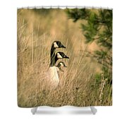 Geese In A Row Shower Curtain