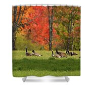 Geese In Autumn Shower Curtain