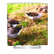 Geese In The Yard Shower Curtain