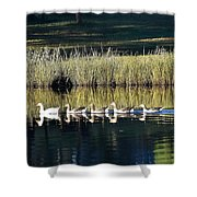 Geese Mother And Young Shower Curtain