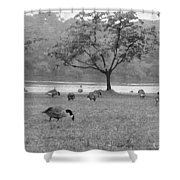 Geese On A Rainy Day Shower Curtain
