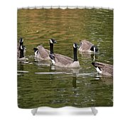 Geese On Pond Shower Curtain