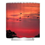 Geese On Their Sunset Arrival Shower Curtain