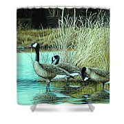 Geese On Watch Shower Curtain