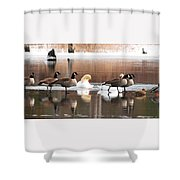 Geese Swans And Ducks Shower Curtain