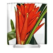Geiger Tree Blossom In Huntington Botanical Gardens In San Marino-california Shower Curtain