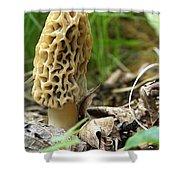 Gem Of The Forest - Morel Mushroom Shower Curtain