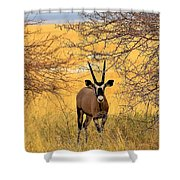 Gemsbok Standoff Shower Curtain