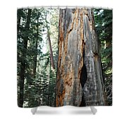General Grant Grove Sequoia Shower Curtain