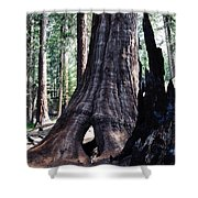 General Grant Grove Sequoia Window Shower Curtain