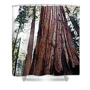 General Grant Grove Streaming Light Shower Curtain
