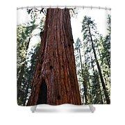 General Sherman Tree Portrait Shower Curtain
