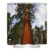 General Sherman Tree Shower Curtain
