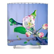Gentle Apple Tree Flowers Shower Curtain