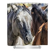 Gentle Face Of A Wild Horse Shower Curtain