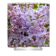 Gentle Purples Shower Curtain