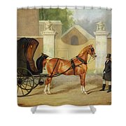 Gentlemen's Carriages - A Cabriolet Shower Curtain