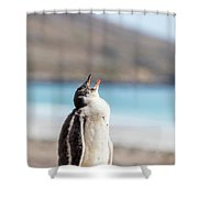 Gentoo Penguin Calling For Mother On Shingle Shower Curtain