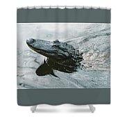 Genuine New O Alligator Shower Curtain