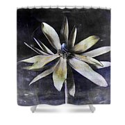 Genus Protea Shower Curtain