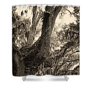 Georgia Live Oaks And Spanish Moss In Sepia Shower Curtain