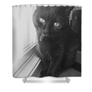 Gepetto The Cat  Shower Curtain