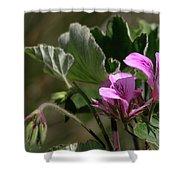 Geranium Blossom Shower Curtain