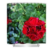 Geranium Flower - Red Shower Curtain