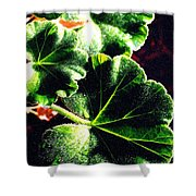 Geranium Leaves Shower Curtain
