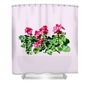 Geraniums In A Row Shower Curtain