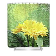 Gerber Daisy And Reflection Shower Curtain