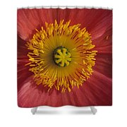 Gerber Greetings Shower Curtain