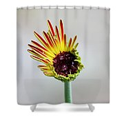 Gerbera Beginnings Shower Curtain