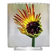 Gerbera Bloom Shower Curtain