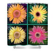 Gerbera Daisy Collage In Square Shower Curtain