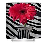 Gerbera Daisy In Striped Vase Shower Curtain