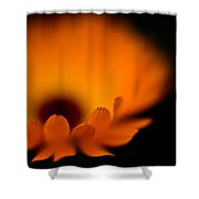Gerbera Fire Shower Curtain