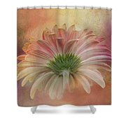 Gerbera From The Back Shower Curtain