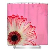 Gerbera Pink Shower Curtain