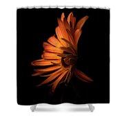 Gerbera Set On Black Shower Curtain